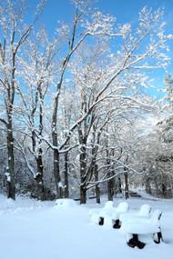 'Thanksgiving Snow' - Peter Fischman