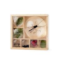 Huckleberry Bug Box (KIK HB07)