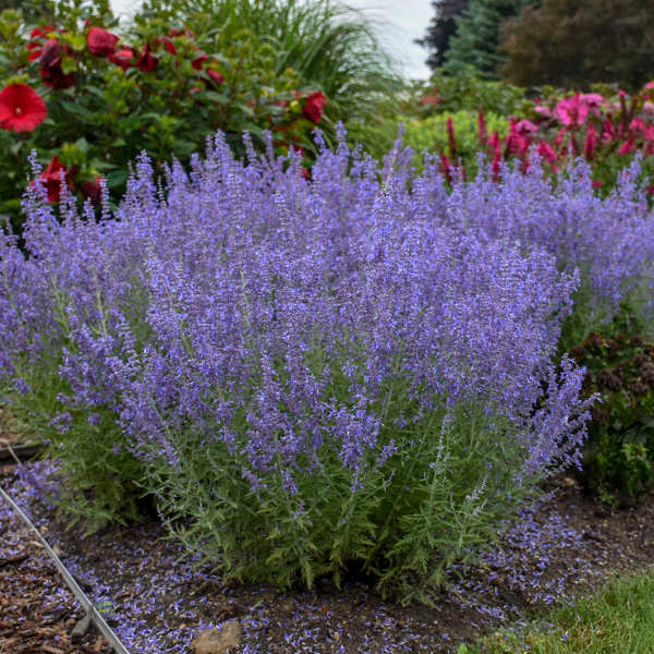 Photograph courtesy of Walters Gardens, Inc.