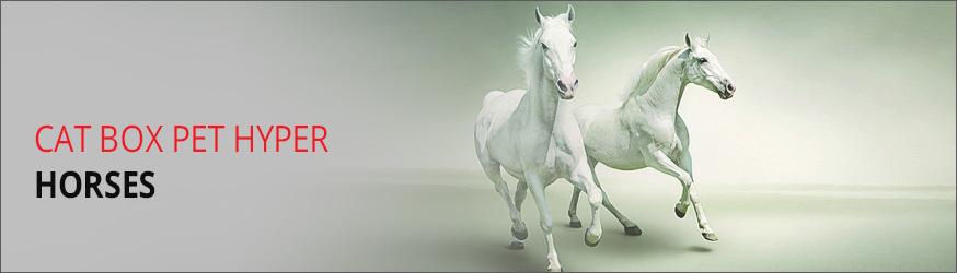 horsers-header.jpg