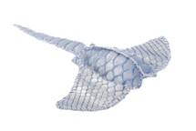 Stingray Charm Python Skin Silver