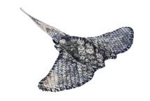 Stingray Charm Python Skin Metallic Silver Blue