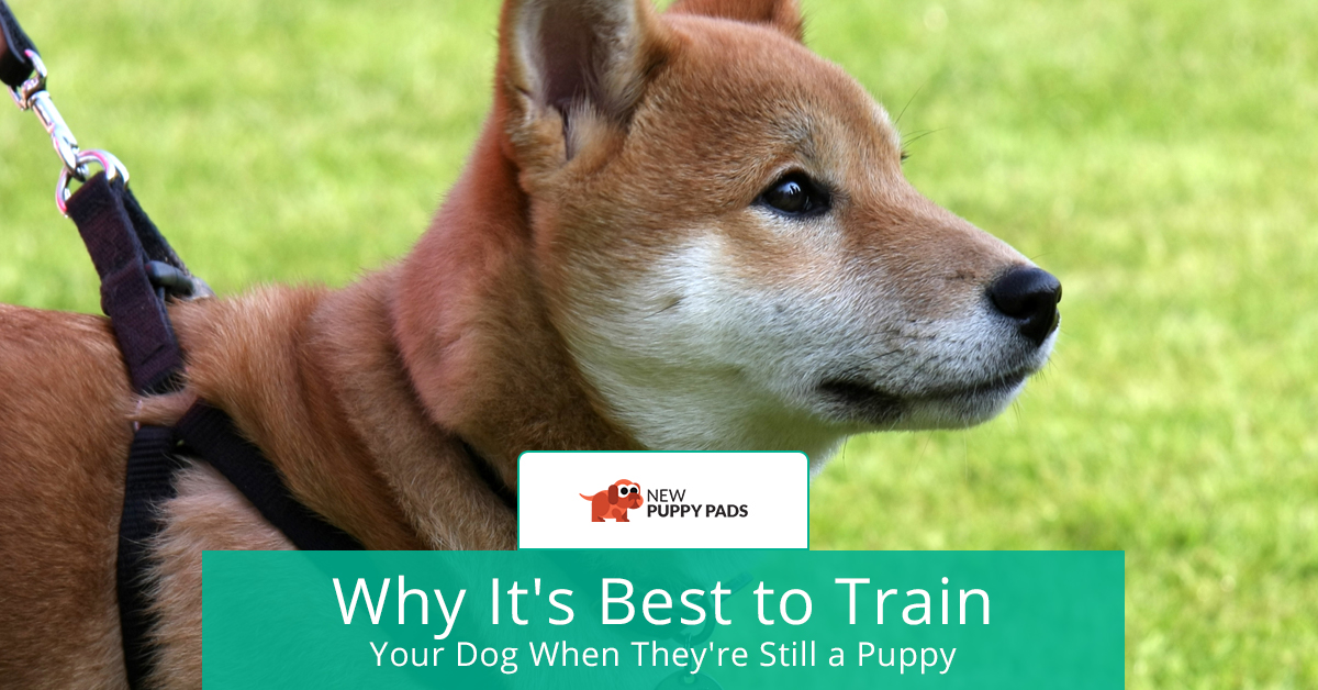 Why It's Best to Train Your Dog When They're Still a Puppy