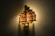 Black Murex Seahell Shell Nightlight