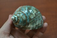 Green Pearl Jade Turbo Hermit Crab Shell