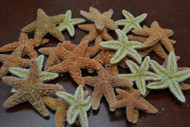Small Sugar Starfish