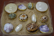 Assort Seashell Storage Trinket Boxes