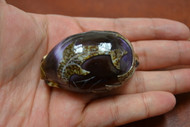 Purple Carved Dolphin Cowrie Shell