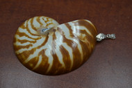 Striped Mother of Pearl Nautilus Shell Pendant