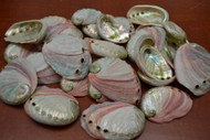 "Small Abalone Seashell (One Side Polished) 2 1/2"" - 3"""