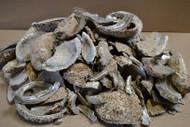Broken Abalone Shell Scrape Blank Pieces Material Craft