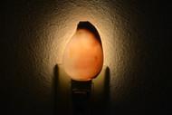 White Egg Cowrie Shell Nightlight