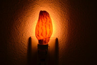 Brown Voluta Lapponica Shell Nightlight