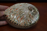 Both Side Polished Abalone Seashell 5""