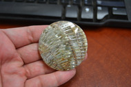 Round Abalone Shell Blank Disc Coin 50mm