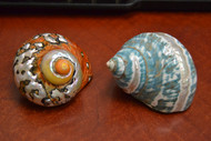 2 Pcs Pearl Green & Sarmaticus Jade Turbo Hermit Crab Shell