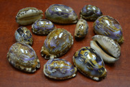 12 Pcs Purple Carved Dolphin Cowrie Shell