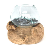 Glass Terrarium Molded on Driftwood (SP)