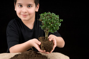 All Ages Bonsai Basics Workshop (August 4, 2019)