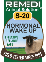 Hormonal Wake Up for Sheep